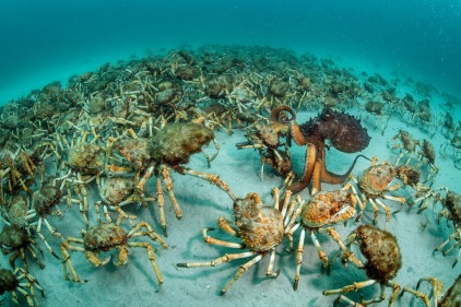 crabs-ocean-octopus-crowd.jpg