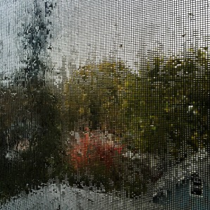 rain-collecting-screen-autumn-fall