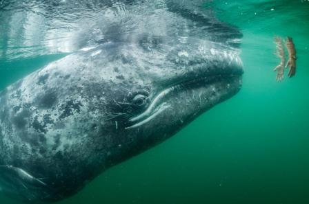 whale-surface-national-geographic.jpg