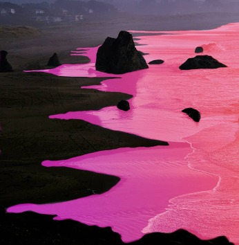pink-flood-black-shore.jpg