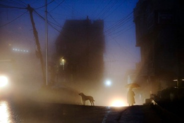 dog-standing-fog-night.jpg