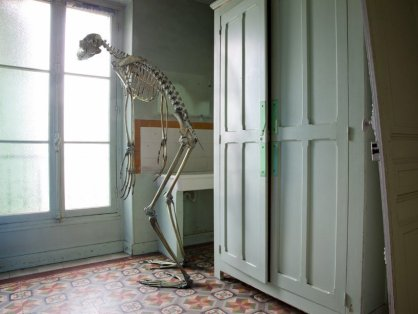 bear-skeleton-looks-window-maybe